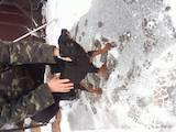 Собаки, щенки Ягдтерьер, цена 1600 Грн., Фото