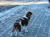 Собаки, щенята Різне, ціна 20000 Грн., Фото