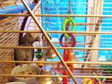 Попугаи и птицы Попугаи, цена 26000 Грн., Фото
