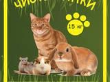 Кошки, котята Аксессуары, цена 12 Грн., Фото