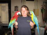 Папуги й птахи Папуги, ціна 12000 Грн., Фото
