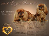 Собаки, щенки Кавалер-Кинг-Чарльз спаниель, цена 24000 Грн., Фото