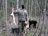 Собаки, щенки Западно-Сибирская лайка, цена 2800 Грн., Фото