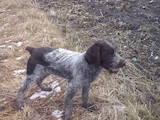 Собаки, щенята Різне, ціна 1200 Грн., Фото