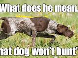 Собаки, щенки Немецкая гладкошерстная легавая, цена 1 Грн., Фото