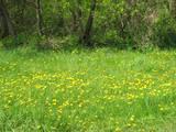 Земля и участки Днепропетровская область, цена 160000 Грн., Фото