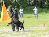 Собаки, щенки Немецкая овчарка, цена 12500 Грн., Фото