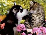 Ветеринарія Ветеринари та ветеринарні клініки, ціна 150 Грн., Фото