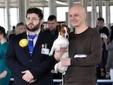 Собаки, щенята Джек Рассел тер'єр, ціна 3000 Грн., Фото