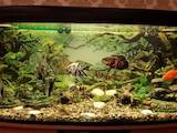 Рибки, акваріуми Акваріуми і устаткування, ціна 1750 Грн., Фото