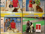 Собаки, щенята Московська сторожова, ціна 6500 Грн., Фото