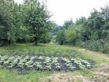 Дачи и огороды Хмельницкая область, цена 290000 Грн., Фото