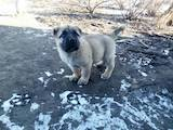 Собаки, щенята Невідома порода, ціна 10000 Грн., Фото