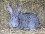 Грызуны Кролики, цена 75 Грн., Фото