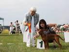 Собаки, щенки Пинчер, цена 10 Грн., Фото