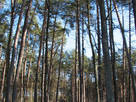 Земля і ділянки Київ, ціна 4500 Грн., Фото