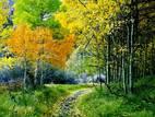 Дачі та городи Черкаська область, ціна 4000 Грн., Фото