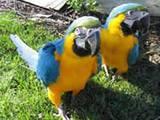 Попугаи и птицы Клетки  и аксессуары, цена 1800 Грн., Фото