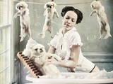 Собаки, щенки Ветеринарные услуги, Фото