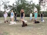 Собаки, щенята Заняття, тренування, ціна 35 Грн., Фото