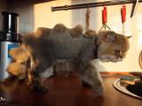 Ветеринарія Інше, ціна 100 Грн., Фото