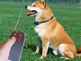 Собаки, щенята Аксесуари, ціна 316 Грн., Фото