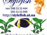 Рыбки, аквариумы Установка и уход, цена 99 Грн., Фото