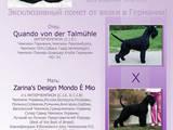 Собаки, щенята Різеншнауцер, ціна 6000 Грн., Фото