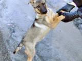 Собаки, щенки Беспородная, цена 50 Грн., Фото