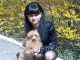 Собаки, щенята Той-пудель, ціна 1500 Грн., Фото