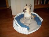 Собаки, щенята Спаровування, ціна 1200 Грн., Фото