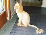 Кошки, котята Ветеринарные услуги, цена 200 Грн., Фото