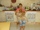 Собаки, щенята Малий пудель, ціна 1000 Грн., Фото
