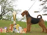 Собаки, щенята Ердельтер'єр, ціна 4000 Грн., Фото