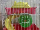Грызуны Клетки  и аксессуары, цена 60 Грн., Фото