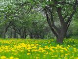 Земля и участки Харьковская область, цена 25000 Грн., Фото