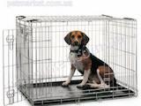 Собаки, щенята Аксесуари, ціна 650 Грн., Фото