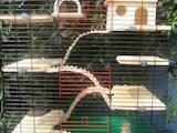 Грызуны Клетки  и аксессуары, цена 20 Грн., Фото