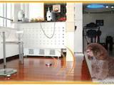 Собаки, щенята Заняття, тренування, ціна 457 Грн., Фото