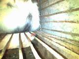 Гризуни Домашні щури, ціна 80 Грн., Фото