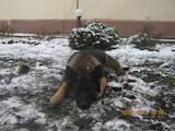 Собаки, щенки Занятия, тренировки, цена 60 Грн., Фото