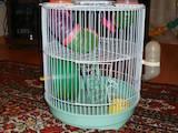 Грызуны Клетки  и аксессуары, цена 150 Грн., Фото