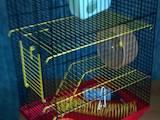 Гризуни Домашні щури, ціна 150 Грн., Фото