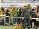 Собаки, щенки Малый шпиц, цена 1200 Грн., Фото