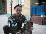 Собаки, щенки Американский стаффордширский терьер, цена 300 Грн., Фото