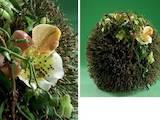 Курсы, образование Курсы флористов, цена 2300 Грн., Фото