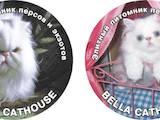 Кішки, кошенята Персидська, ціна 1000 Грн., Фото