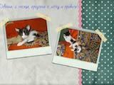 Кошки, котята Европейская короткошерстная, цена 10 Грн., Фото