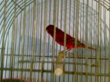 Попугаи и птицы Корм, цена 100 Грн., Фото