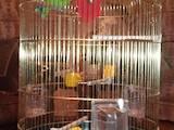 Попугаи и птицы Клетки  и аксессуары, цена 650 Грн., Фото